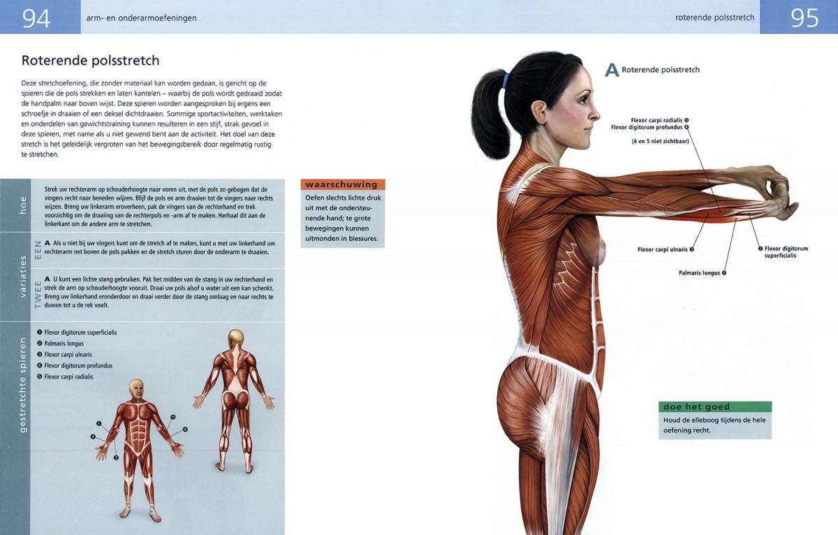 Rek En Strekoefeningen.Anatomie Van Rek Strekoefeningen Librero B V
